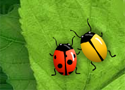 2 Many Bugs Game