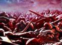 Battle for Alandria Online Games