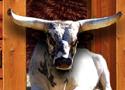 Bucking Bull Racing Game